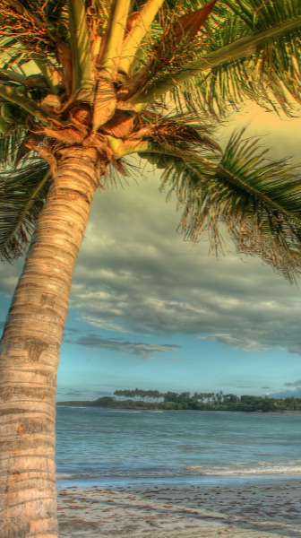 photograph of a palm tree on a beach