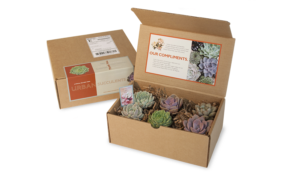 Urban Succulents Packaging
