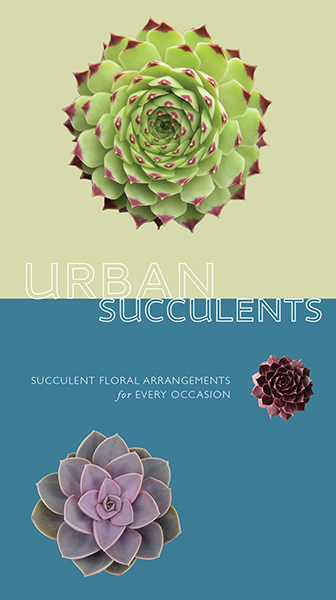 packaging design - urban succulents